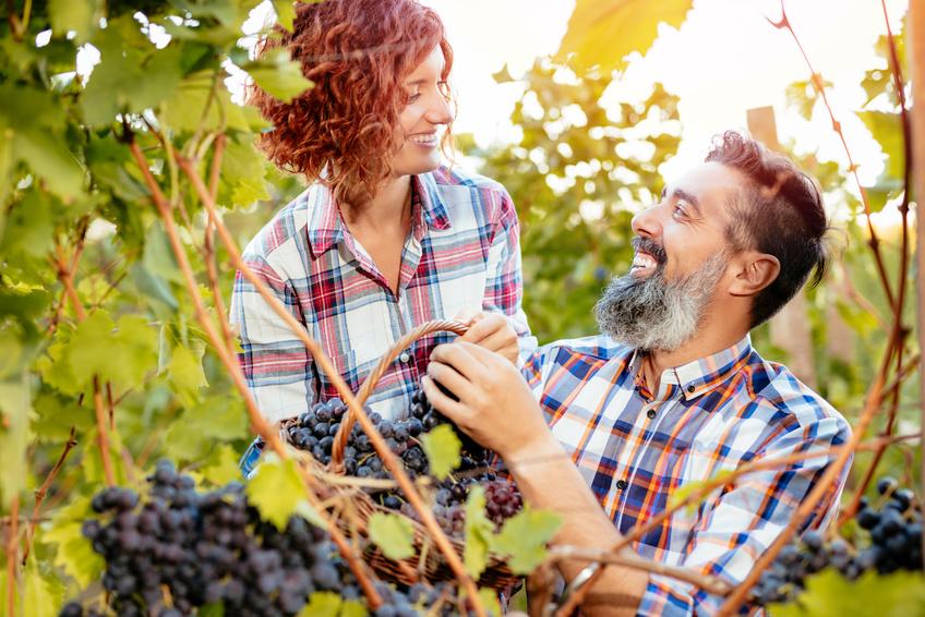 un couple dans les vignes